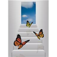 Étape papillons