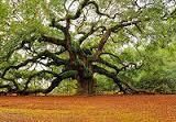 arbre tordu